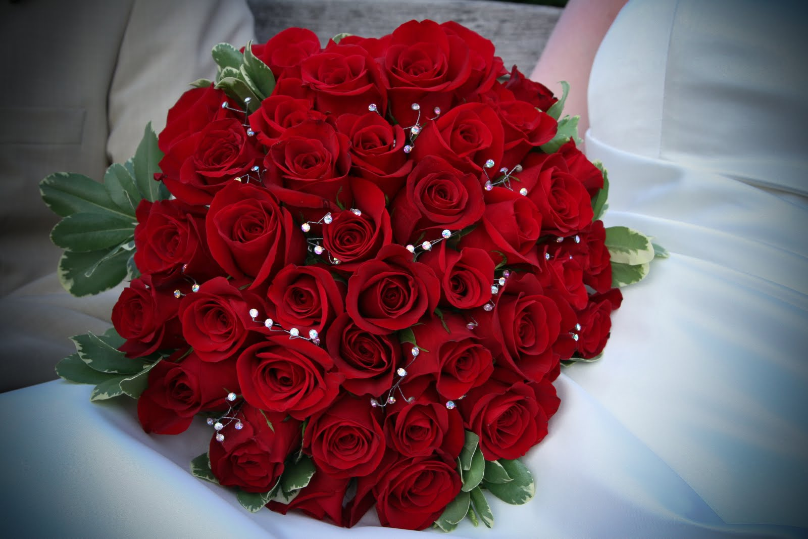 The Most Beautiful Red Flower In The World
